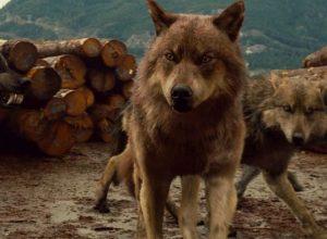 Список топ 10 лучших фильмов про волков