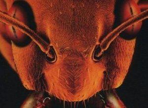 Фильмы ужасов про муравьев убийц