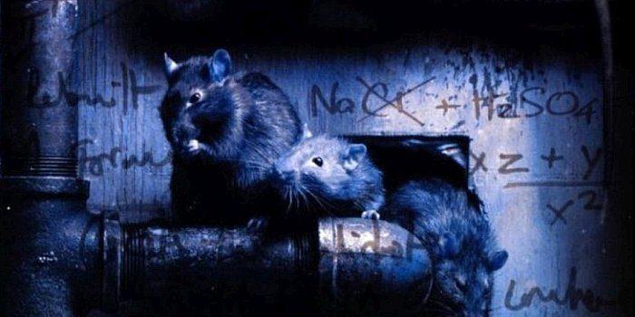 Список топ 10 лучших фильмов ужасов про крыс убийц