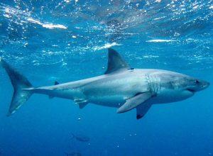 Список 10 лучших документальных фильмов про акул