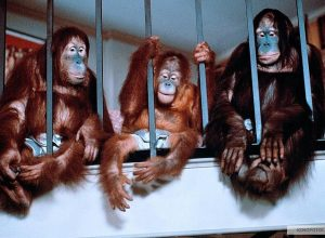 Лучшие комедии про обезьян