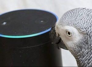 Умный попугай совершает покупки через умную колонку