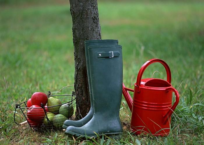 Что стоит сделать в сентябре огороднику?