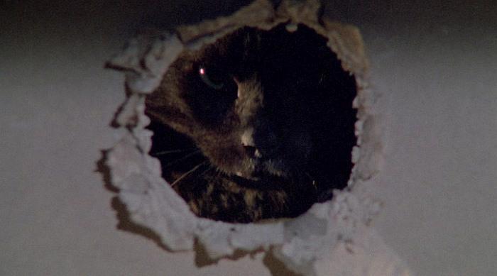 Фильмы ужасов про кошек и котов