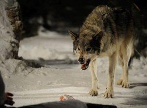 Фильмы ужасов про волков убийц