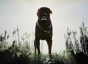 Фильмы ужасов про собак