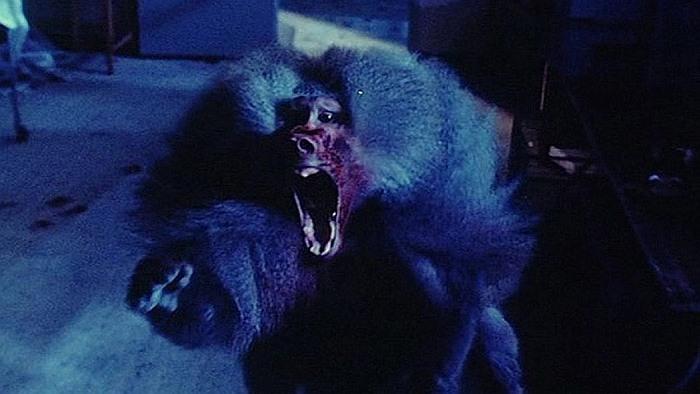 Фильмы ужасов про обезьян убийц