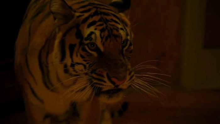 Фильмы ужасов про тигров и львов людоедов