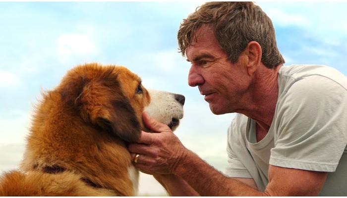 Фильмы Собачья жизнь
