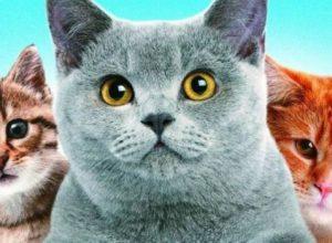 Список топ 10 лучших фильмов про кошек