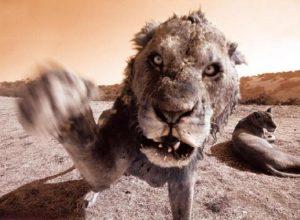 Список топ 10 лучших фильмов про животных убийц